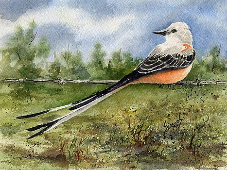 Scissor-Tail Flycatcher by Sam Sidders