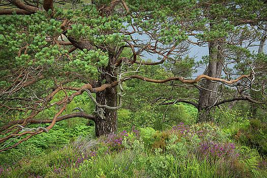Scottish Highlands by Christian Heeb