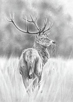 Scottish Stag by Ed Teasdale