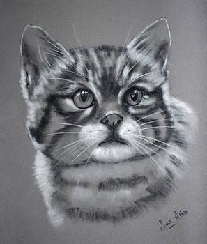 Scottish wildcat kitten by Sue Arber