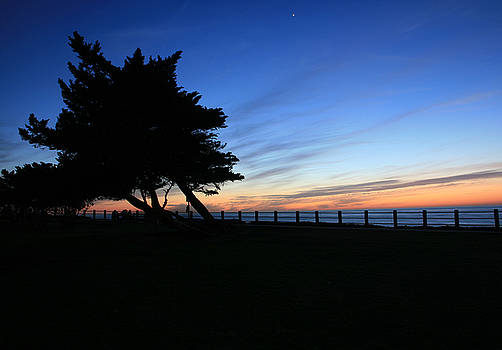 Scripps Park Silhouette by Scott Cunningham