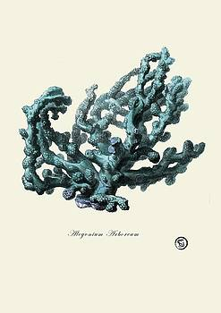 Sea Coral by Patruschka Hetterschij