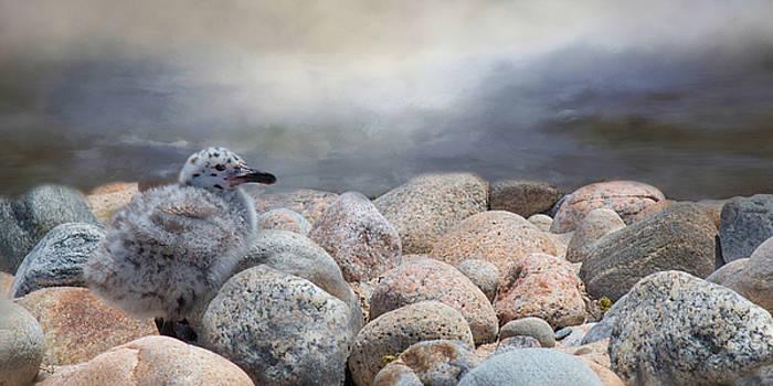 Sea Eagle by Robin-lee Vieira