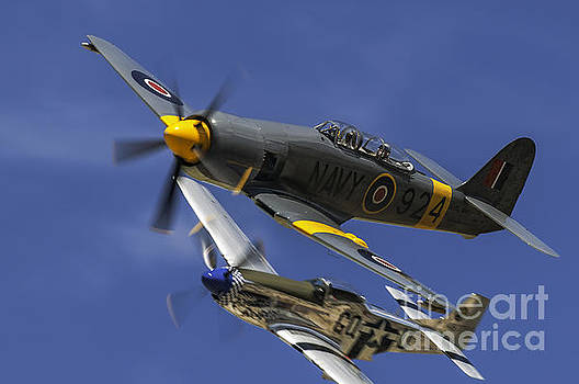 Sea Fury And P51 PRS by Steve Rowland