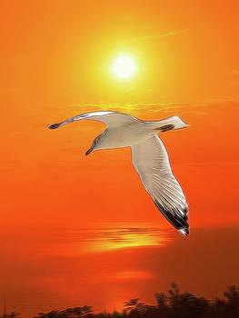 Sea Gull by Athala Carole Bruckner