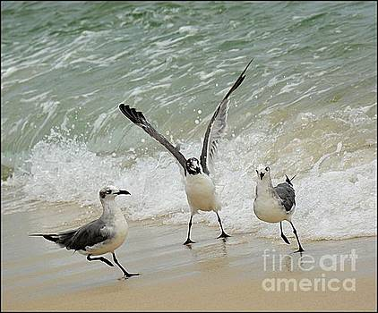 Sea Gulls by Janice Spivey