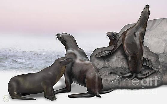 Sea Lion Zalophus californianus - Marine Mammals - Seeloewen by Urft Valley Art