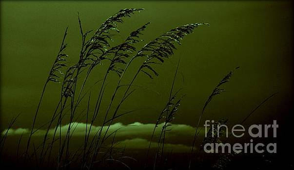 Sea Oat and Clouds by Janice Spivey