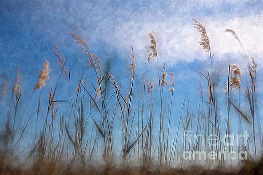 Dan Carmichael - Sea Oats and Sky on Outer Banks AP
