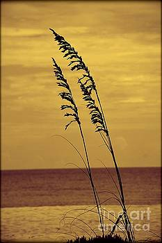 Sea Oats by Janice Spivey