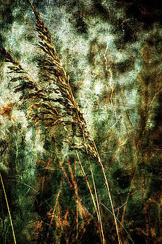 Sea Oats on the beach by Gulf Island Photography and Images