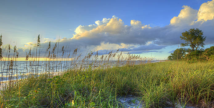Sea Oats by Sean Allen