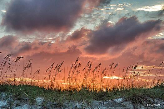 Sea Oats Sunset by Phil Mancuso