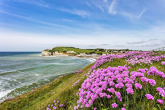 Sea Of Pink Thrift by English Landscapes