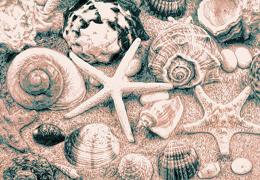 Sea Shells Collection by Sandi OReilly