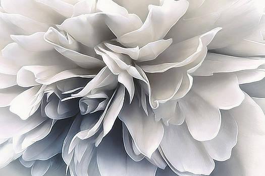 Sea Shells by Darlene Kwiatkowski