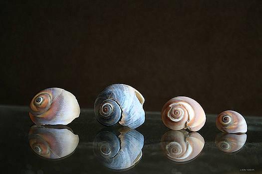 Linda Sannuti - Sea snails