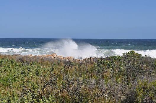 Sea Spray by Linda Ferreira