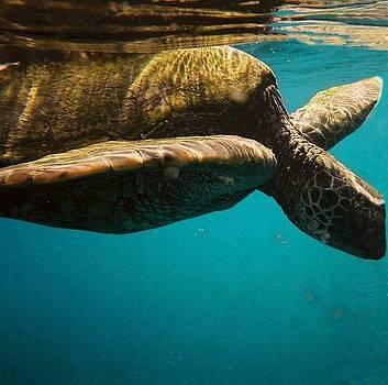 Sea Turtle by Cathy P Jones