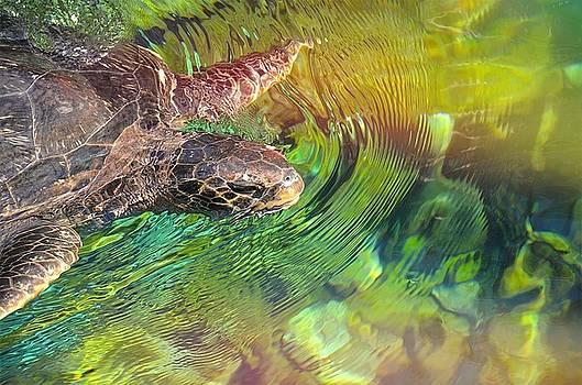 Sea Turtle Love by Nikki McInnes