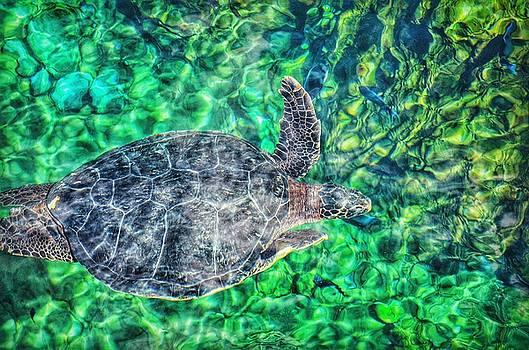 Sea Turtle by Nikki McInnes