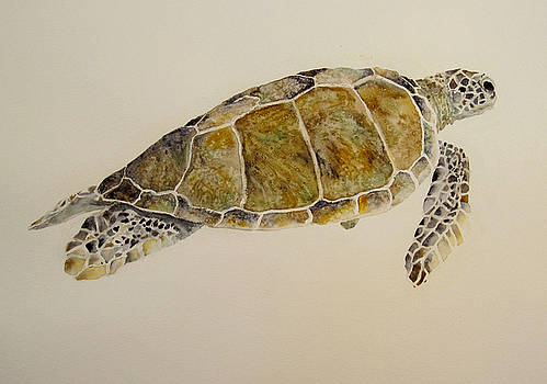 Sea Turtle by Theresa Higby