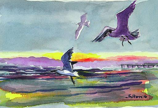 Seabirds at the seashore by Julianne Felton