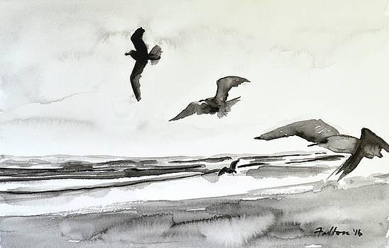 Seabirds in black and white by Julianne Felton