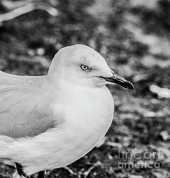 Seagull 1 by Naomi Burgess