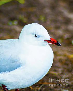 Seagull 4 by Naomi Burgess