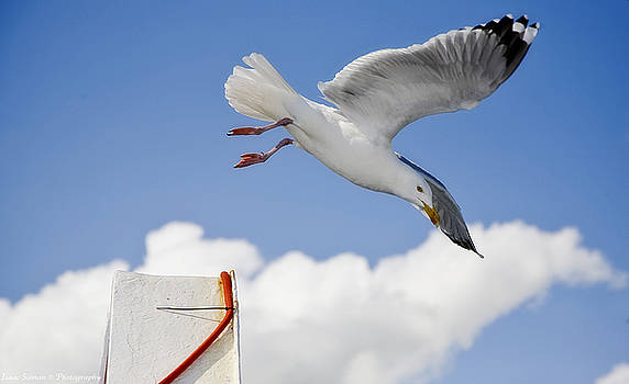 Seagull  above ferryboat by Isaac Silman
