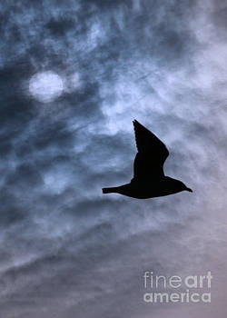 Seagull and Sun by Mim White