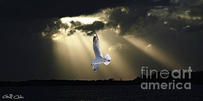 Seagull and Sunbeams. Original Exclusive Photo Art. by Geoff Childs