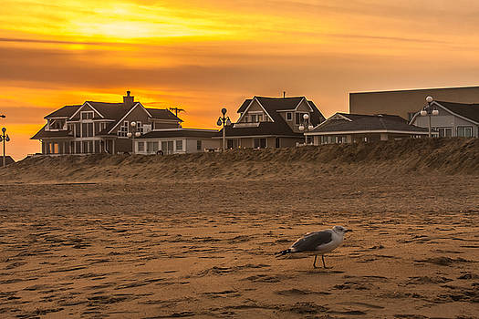 Seagull at Sunset by Kathleen McGinley