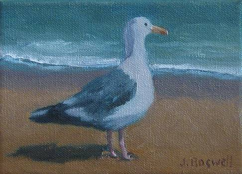 Seagull at the Beach by Jennifer Boswell