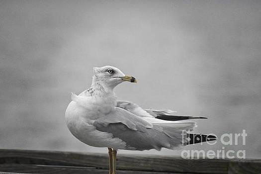 Seagull at the Marina by Ella Kaye Dickey