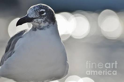 Seagull by Carol McGunagle