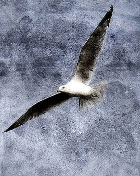 Seagull by Gulf Island Photography and Images
