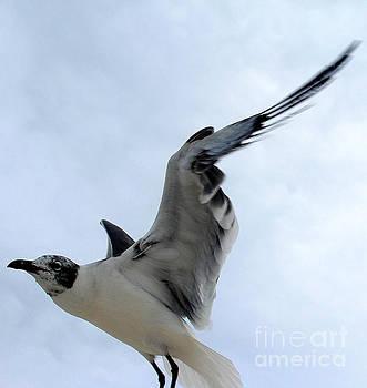 Seagull in Flight II by Jeanne Forsythe