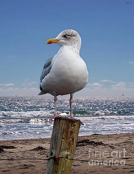 Seagull On The Shoreline by Phil Perkins