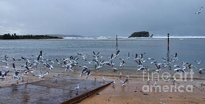 Seagulls At River by Trena Mara