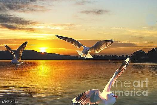 Seagulls at Sunrise... Exclusive Original stock Photo Art  by Geoff Childs