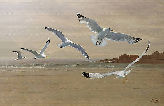 Seagulls Flying Along  the Beachfront by IM Spadecaller