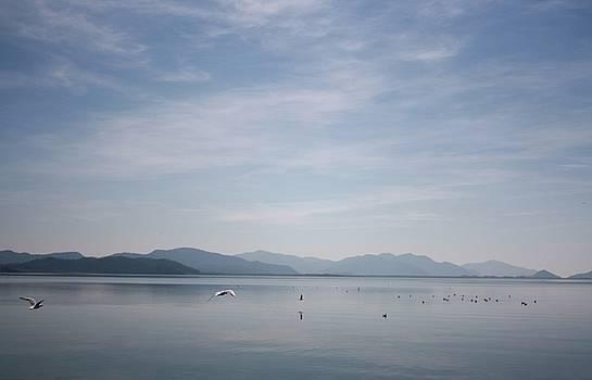 Tracey Harrington-Simpson - Seagulls on Koycegiz Lake