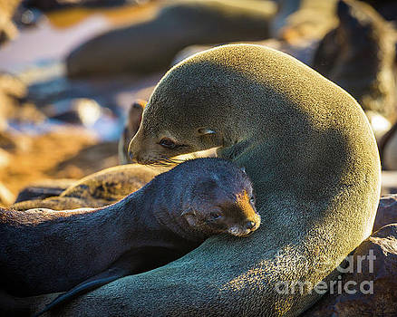 Seal Mom and Pup by Inge Johnsson