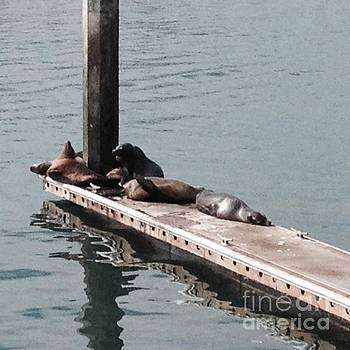 Seals at Oceanside by Laurie L