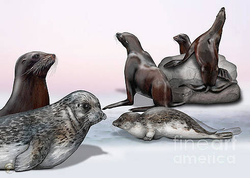 Seals - nature interpretation panels - naturlehrtafeln - zoo schautafeln - natuur informatiepanelen by Nature-Interpretation-Panels - Naturlehrtafeln - S Maassen-Pohlen