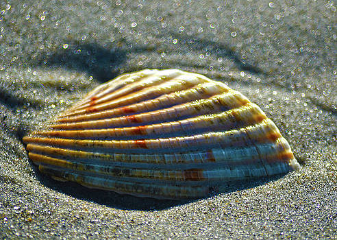 Sandi OReilly - Seashell After The Wave