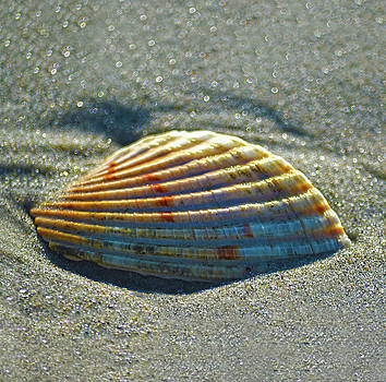Sandi OReilly - Seashell After The Wave Square