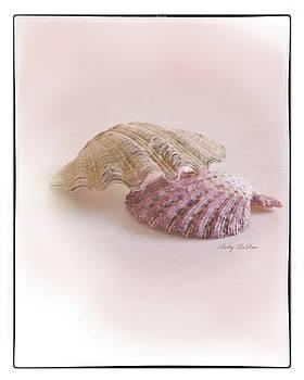 Seashell Love by Betty LaRue